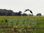 Plus de 2.000 Bec-ouverts indiens au parc national de Tram Chim