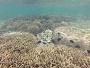 Écosystèmes marins en péril