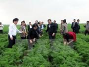 Cam Giang appelé à développer des zones agricoles à haute valeur ajoutée
