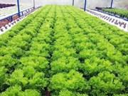 Vietnam et Israël coopèrent dans le développement de l'agriculture biologique