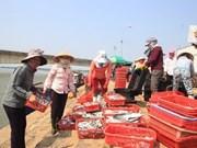 Les pêcheurs de Hà Tinh retrouvent une vie normale