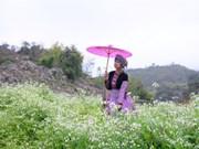 Les fleurs «oubliées» font leur retour