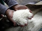 Le Laos prévoit d'exporter 400.000 tonnes de riz en 2017