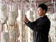 Faire fortune grâce à la myciculture