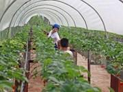 Vietnam, l'un des grands sites pour les investisseurs indiens