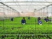 Le plan d'aménagement général de la zone agricole de haute technologie de Phu Yên ratifié
