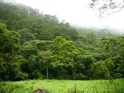 Le Vietnam vise un taux de couverture forestière de 45% d'ici 2030