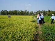 APEC 2017: une semaine sur la sécurité alimentaire prévue à Cân Tho