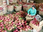 Les fruits vietnamiens conquièrent les marchés étrangers