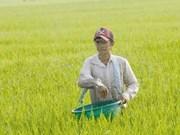 La Chine, premier fournisseur d'engrais du Vietnam