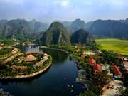 La beauté de la saison du riz mûr de la baie d'Halong sur la terre