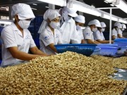 Hausse des exportations de noix de cajou vers les États-Unis