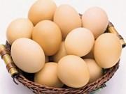 Sommet sur la production et la consommation d'œufs au Vietnam