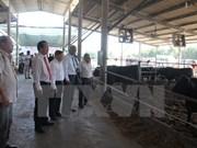Vietnam et Japon signent un contrat dans l'élevage du bœuf wagyu