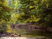 Protection des forêts : L'UE octroie au Cambodge 3,3 millions de dollars