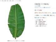 Des produits vietnamiens qui se vendent très chers sur les sites d'e-commerce