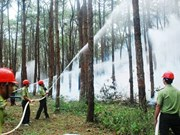 Dak Nong met l'accent sur la prévention des incendies à la saison sèche