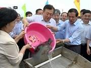 Vietnam et Chine relâchent des géniteurs dans le golfe du Bac Bo