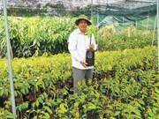 La culture des semis : une opportunité en or pour les paysans de Bên Tre