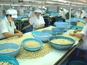 L'exportation de noix de cajou atteint  plus de 1,3 milliard de dollars en cinq mois