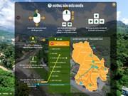 Le portail de la réalité virtuelle de la zone de production du ginseng de Ngoc Linh voit le jour