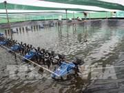 Régler les difficultés pour le développement du secteur des crevettes du Vietnam