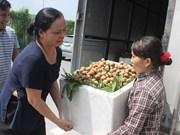 Hanoï exporte 19 tonnes de longanes aux Etats-Unis et en Europe