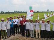 Transfert des connaissances sur la protection végétale aux paysans