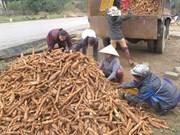Les exportations nationales de manioc et de produits dérivés se portent bien