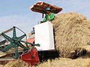 Une ferme étatique va exporter les pailles au Japon