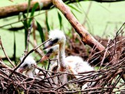 Le parc national d'U Minh Thuong, 2.228e site Ramsar du monde