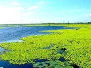 U Minh Thuong devient le 2.228e site Ramsar du monde