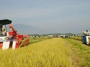 Nouvelle ruralité: Hoa Vang, la métamorphose