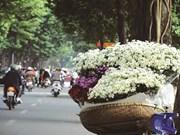 Fleurs des quatre saisons à Hanoi