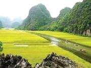 Le tournage du film américain Kong : Skull Island est à Ninh Binh