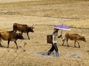Le Vietnam s'emploie à faire face à la sécheresse et à la salinisation