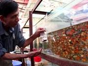 La fièvre des poissons d'aquarium gagne le Vietnam