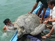 Plan d'action pour la conservation des tortues marines
