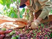 1er trimestre : bond des exportations nationales de riz et de café