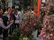 Ouverture de la Fête des cerisiers à Hô Chi Minh-Ville 2016