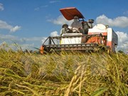 Le Japon ouvrira une entreprise de transformation et commercialisation du riz à Yen Bai