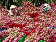 L'Australie pourrait importer des fruits du dragon vietnamiens