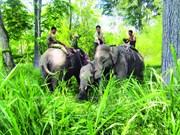 Aide internationale pour la protection des éléphants à Dak Lak