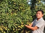 Premier lot de litchis frais vietnamiens exporté aux États-Unis en 2016