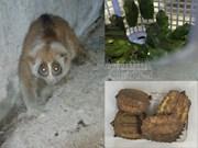 Sauvegarde de 40 animaux sauvages rares