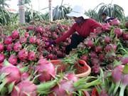 Les exportations vietnamiennes de fruits et légumes poursuivent sur leur lancée