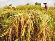 5,7 millions de tonnes de riz exportées en 2016