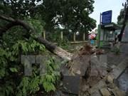 Le typhon Mirinae fait un mort et plusieurs blessés dans des localités du Nord