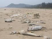 Rétablir l'écologie marine du Centre après l'incident écologique