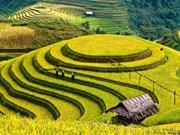 Yên Bái: deux semaines touristiques à la fois